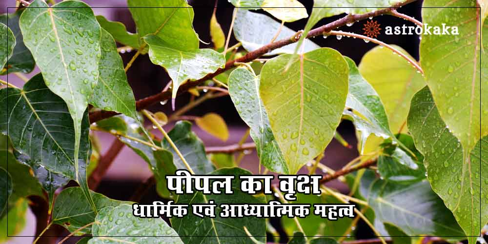 Importance and Benefits of Peepal Tree