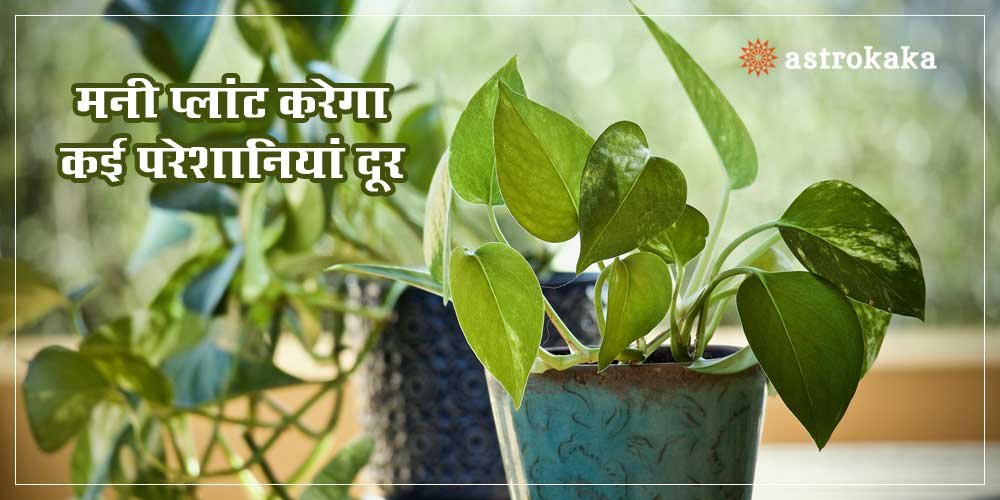 Money Plant Vastu Tips for Wealth and Peace