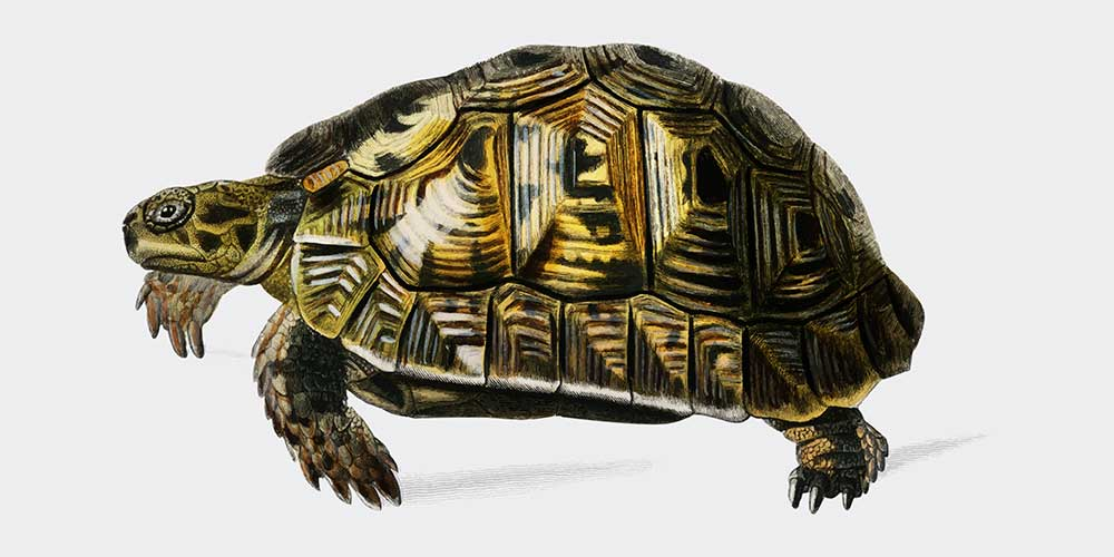 Placing Turtle at Home can change your Luck