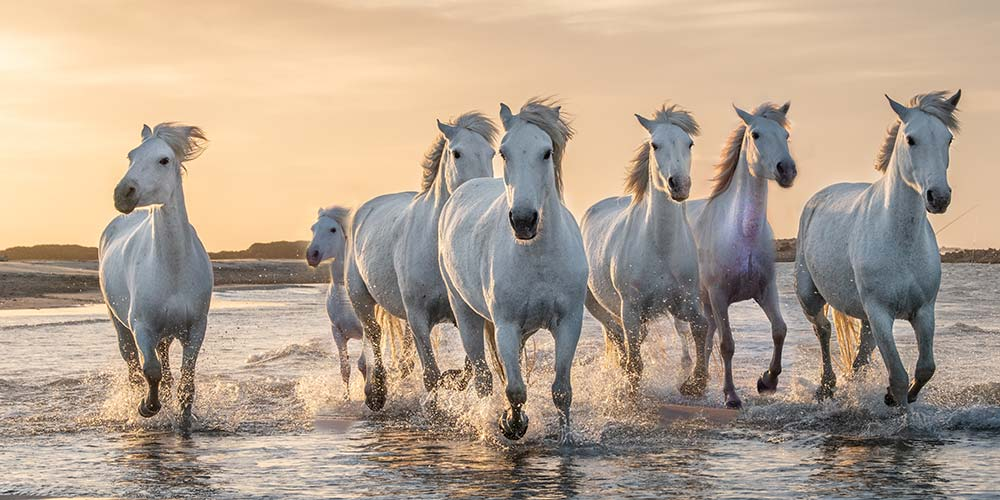 Effects of Placing Horses Painting according to Feng Shui